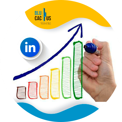 BluCactus - LinkedIn Business strategies - positions of the brand