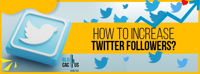 BluCactus - How to increase your twitter followers? - title