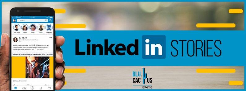 BluCactus - LinkedIn Stories - title