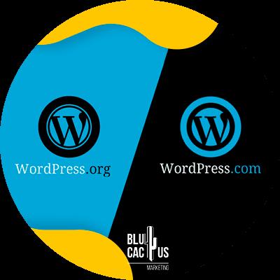 Blucactus - wordpress