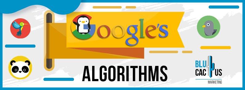 BluCactus - Google algorithms - title