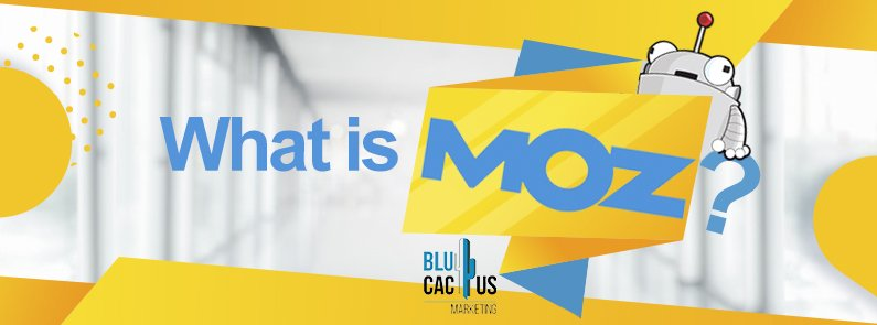 BluCactus -what is Moz - title