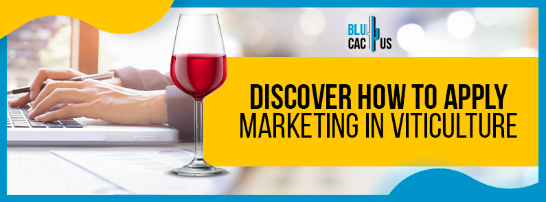 BluCactus - marketing strategies for wine brands - title