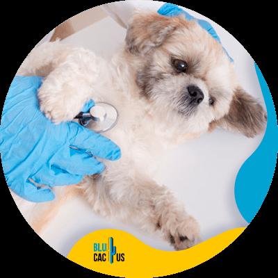 BluCactus - pet store - important information
