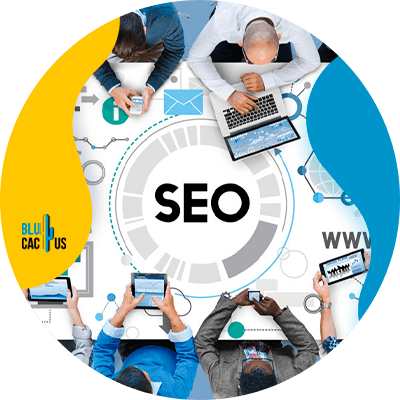 BluCactus - SEO for start-ups - important information