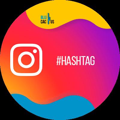BluCactus - gain more Instagram Followers - important information