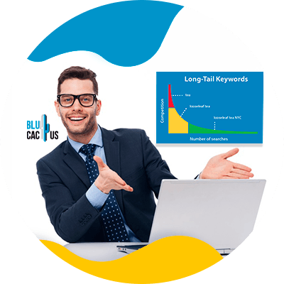 BluCactus - SEO for lawyers - important information