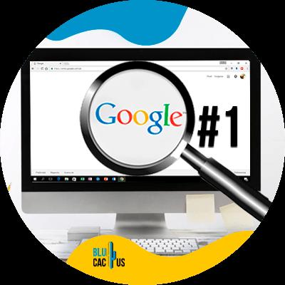 BluCactus - Domain Authority - important data