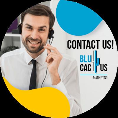 BluCactus - Domain Authority - contact us