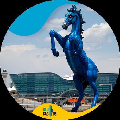 BluCactus - SEO in Denver - important data