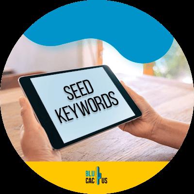 BluCactus - Seed Keywords