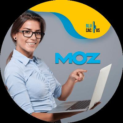 BluCactus - present a digital marketing strategy - Moz