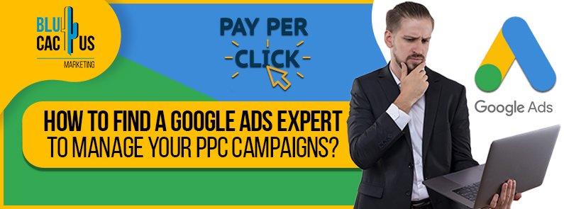 BluCactus - Google Ads Expert - title
