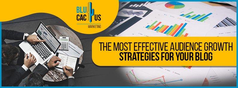 BluCactus - Audience Growth - title