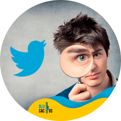 BluCactus - Twitter marketing strategy - important data
