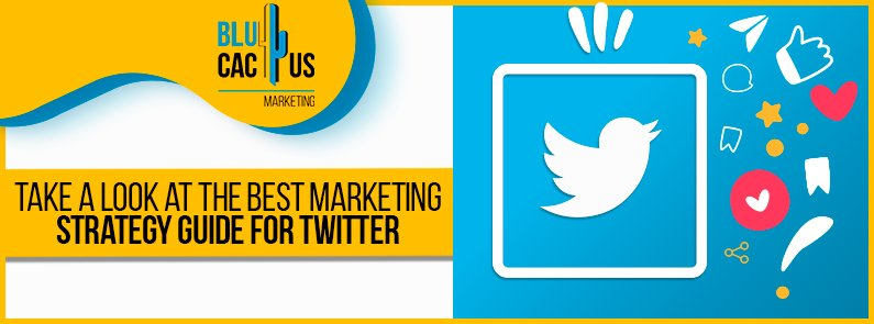 BluCactus - Twitter marketing strategy - title