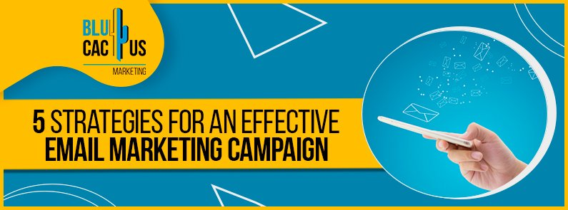 Blucactus - 5 strategies for an effective email marketing campaign banner