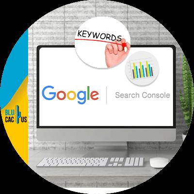 BluCactus - Google Search Console - important data