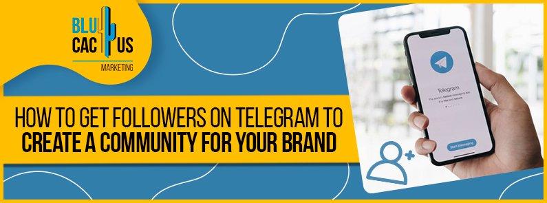 BluCactus - followers on Telegram - banner