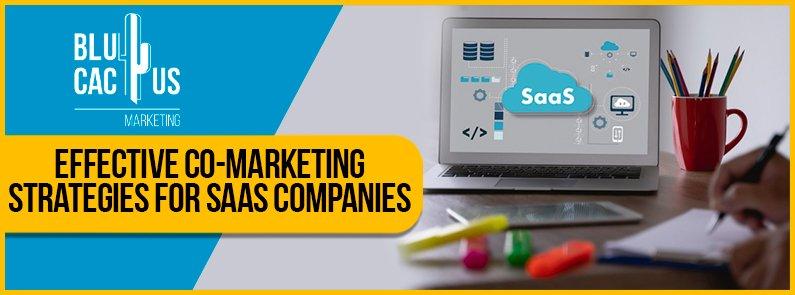 Blucactus - effective co-marketing strategies for saas companies banner