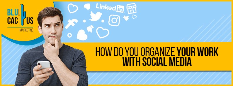 Blucactus - how do you organize your work with social media banner