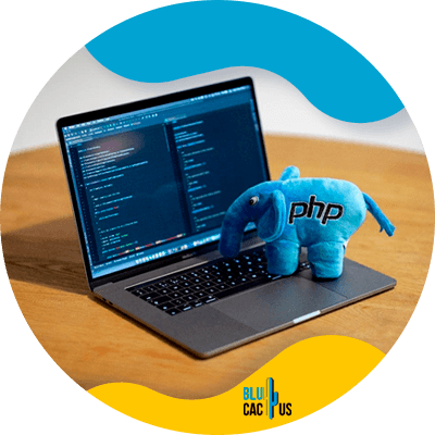Blucactus - mastering the best programming language - How to Become a Software Developer
