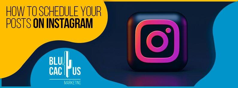 BluCactus - posts on Instagram